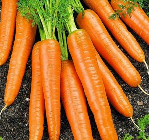 Морковь Вероника F1