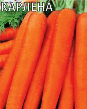 Морковь Карлена DH
