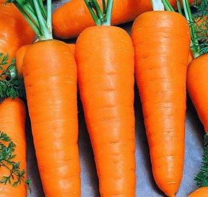 Морковь Болтекс F1