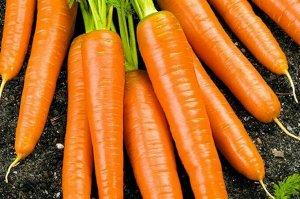 Морковь Осенний марафон
