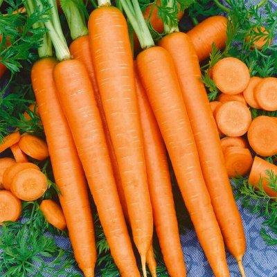 Огромная распродажа семян! +Предзаказ крутого чеснока и лука — Морковь (семена) — Семена овощей