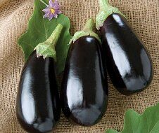 Русский огород - семена овощей, цветов  В наличии — Баклажаны — Семена овощей