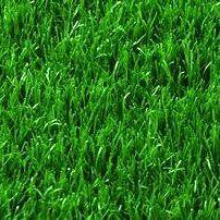 Русский огород - семена овощей, цветов  В наличии — Газоны — Семена цветов