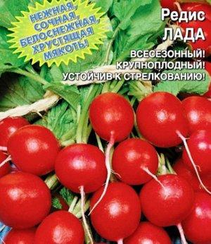 Редис Лада Раннеспелый сорт для всесезонного использования с деликатными вкусовыми качествами. Корнеплоды крупные, округлой формы, интенсивно-красного цвета, с нежно-белой, вкусной и очень сочной мяко