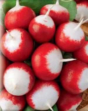 Редис Маяк Раннеспелый тетраплоидный сорт. Редис-великан: корнеплоды блестящего красного цвета достигают 9 см в диаметре. Форма корнеплода - от округлой до продолговатой. Мякоть плотная, сочная, вкусо