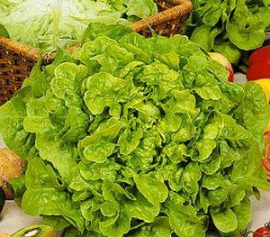 Салат Кук Всегда кстати и никогда не лишний, лёгкий среднеспелый листовой салат с аппетитными тёмно-зелёными, слабопузырчатыми, волнистыми по краю листьями. Масса розетки листьев около 350 г, высота 1