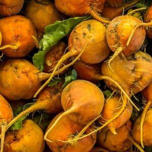 Свекла кормовая Северная оранжевая