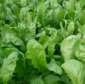 Кресс-салат Дукат