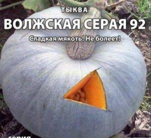 Тыква Волжская серая 92