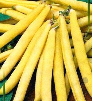 Фасоль овощная Октава