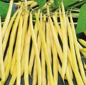 Фасоль овощная Злата