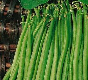 Фасоль овощная Московская белая зеленостручная 556
