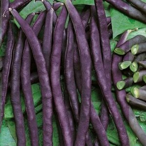 Фасоль овощная Румба