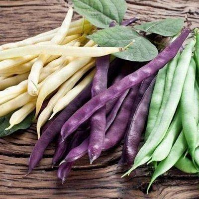Огромная распродажа семян! +Предзаказ крутого чеснока и лука — Фасоль (семена) — Семена овощей