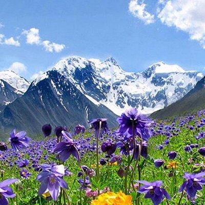 ~Эко-домик  ~Товары с эко-составом  — Алтайские бальзамы на травах. Безалкогольные. — Витамины, БАД и травы