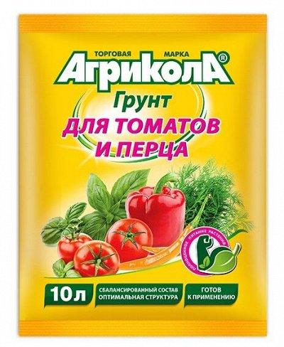 Озимые лук-севок и чеснок в наличии! Таких цен не бывает! — Агрикола — Удобрения и агрохимия
