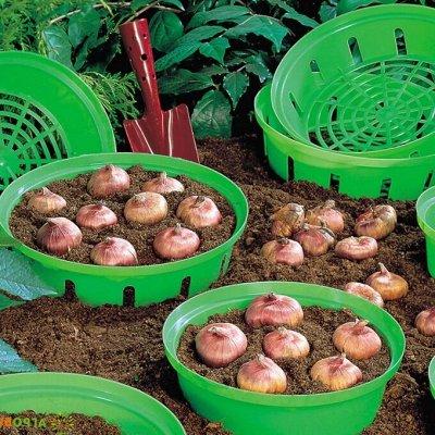 Sweet Garden. Всё для сада и огорода.  — Луковичные и сопутствующие товары — Садовый инвентарь