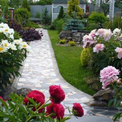 Sweet Garden. Всё для сада и огорода и не только.  — Цветы и сопутствующие товары — Декоративноцветущие