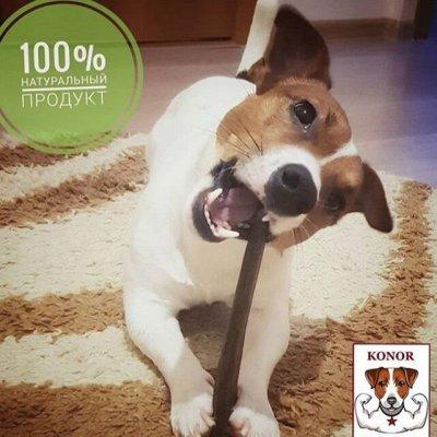 Лакомство для вашей собаки! Рога северного оленя, деликатес! — Фото, отзывы, полезная информация — Лакомства и витамины