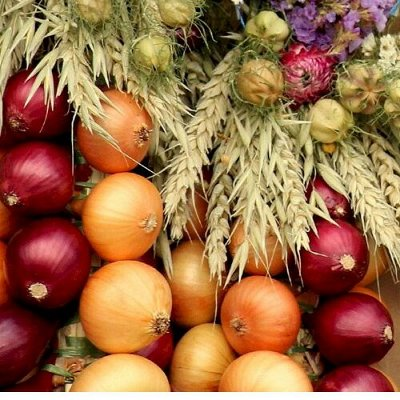 Sweet Garden. Всё для сада и огорода и не только.  — Лук  и сопутствующие товары — Семена зелени и пряных трав