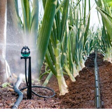 Sweet Garden. Всё для сада и огорода.  — Капельный полив облегчит жизнь любому дачнику — Садовый инвентарь