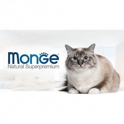 Зверьё Мое — корма, лакомства, аксессуары.  — Monge, Eukanuba, Gemon для кошек — Корма