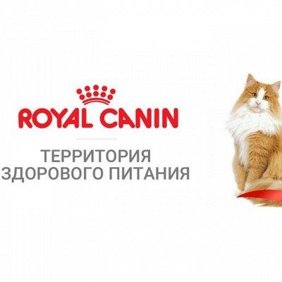 Зверьё Мое — корма, лакомства, аксессуары.  — Royal Canin корм для кошек — Корма