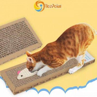 Karmy - корм для собак и кошек премиум класса! — Когтеточки для кошек — Когтеточки