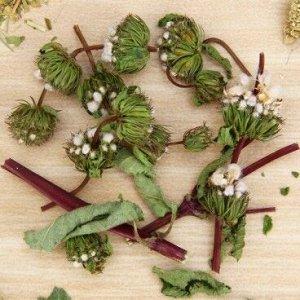 Зопник (трава и цветы)