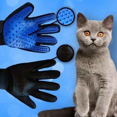 Karmy - корм для собак и кошек премиум класса! №34 — Перчатка для вычесывания шерсти домашних животных! — Для животных