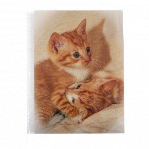 Фотоальбом на 36 фото 10х15 см Pioneer Puppies and kittens рыжие котята