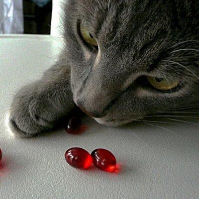 Domosed.online - Товары для животных   — Витамины и микроэлементы. Б — Лакомства и витамины