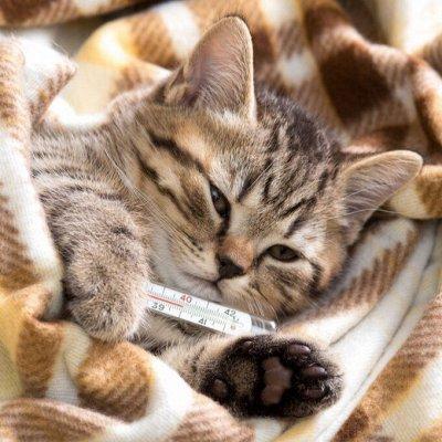 Domosed.online - Товары для животных   — Антибактериальные и противовирусные препараты. Б — Лакомства и витамины
