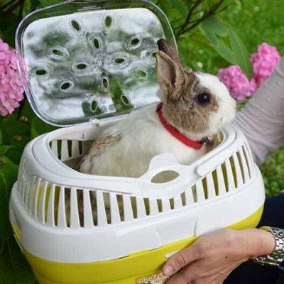 Domosed.online - Товары для животных   — Переноски. Б — Аксессуары