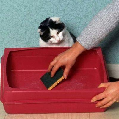 Domosed.online - Товары для животных   — Средства для гигиены и ухода. Б — Уход