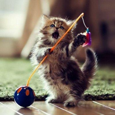 Domosed.online - Товары для животных   — Игрушки. Б — Игрушки