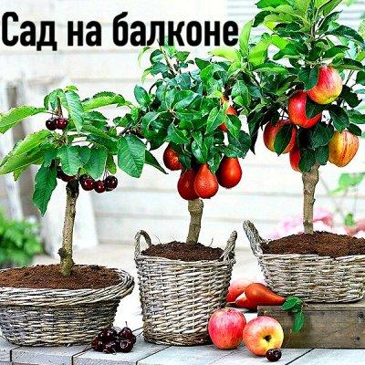 Плодовые! Малиновые деревья! Саженцы гигантской ежевики!