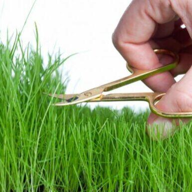 Sweet Garden. Всё для сада и огорода и не только.  — Создай на участке идеальный газон /семена, удобрения и пр./ — Семена газонных трав