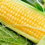 ORGANICbar для самых изысканных вкусов — НОВИНКА!!! Индийская сладкая кукуруза  60 руб. за початок — Овощи