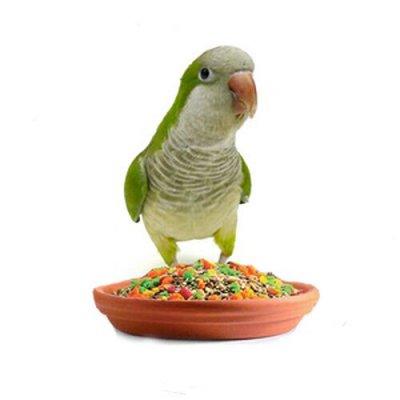 Догхаус. Быстрая закупка зоотоваров   — Корма и лакомства для птиц — Корма