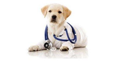 Догхаус. Быстрая закупка зоотоваров   — Ветеринарные препараты — Для животных