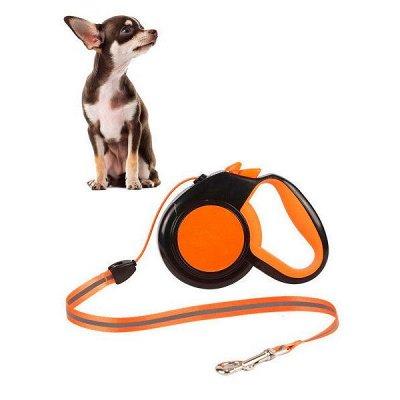 Догхаус. Быстрая закупка зоотоваров   — Амуниция и вольеры для собак — Аксессуары и одежда