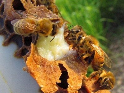 Дары Кавказа* Приправы,Чай, Сладости, Соусы, Орехи, Мёд — Продукты Пчеловодства* — Мед