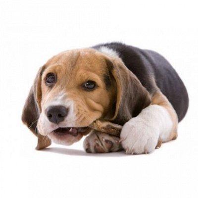 Догхаус. Быстрая закупка зоотоваров   — Лакомства для собак — Лакомства и витамины