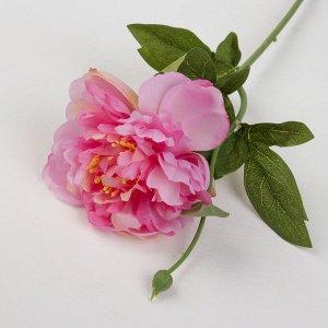 """Цветы искусственные """"Пион с бутончиком"""" 10*57 см, розовый"""