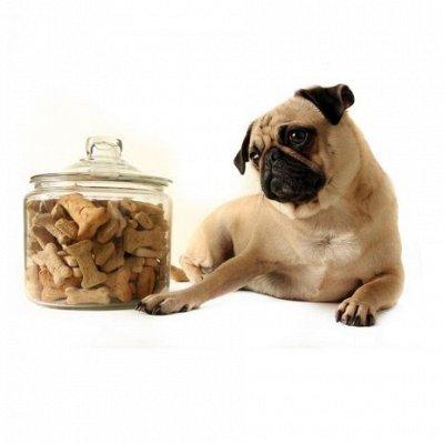 Догхаус. Большая закупка зоотоваров  — Лакомства для собак — Лакомства и витамины