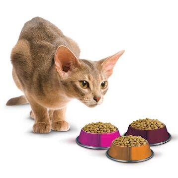 Догхаус. Большая закупка зоотоваров  — Сухие корма для кошек — Корма