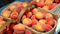Персик карликовый Сусова (подвой алыча) около 80см