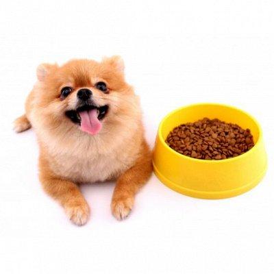 Догхаус. Большая закупка зоотоваров  — Сухие корма для собак — Корма