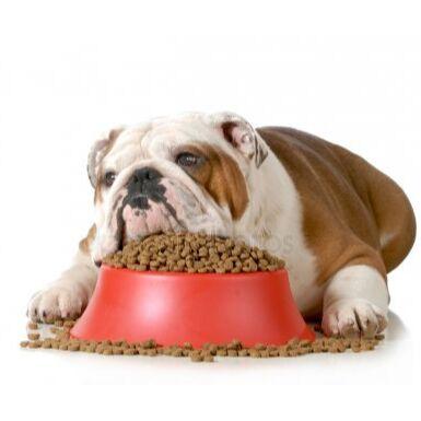 Догхаус. Большая закупка зоотоваров  — Диета для собак — Корма